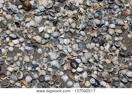 shells on the shore of the beach into the sea