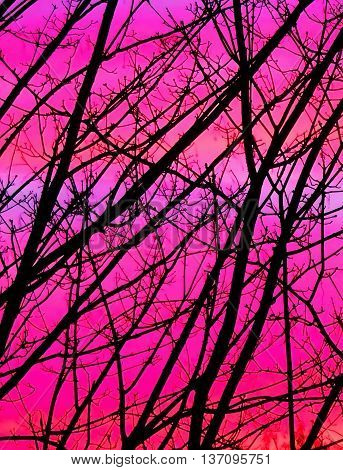 Bare trees or winter tree tops in the afterglow.