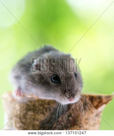 funny little hamster on a piece of wood