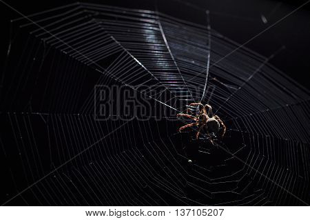Contrast light image of big brown garden spider in center of his web with small insect prey at night on black background horizontal view