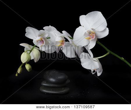 White orchid phalaenopsis flower covered with water drops and stones for massage on a black background