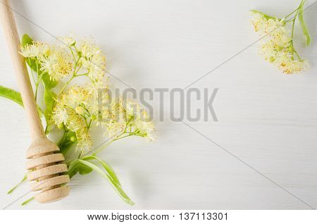 Fresh linden flowers on a white wooden background. Folk, alternative, complementary medicine, traditional medicine.