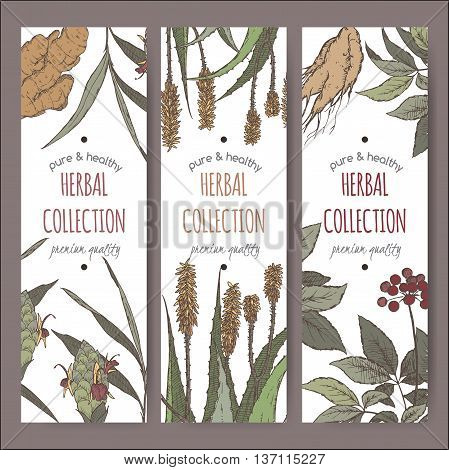 Set of three color vector herbal tea labels with ginger, aloe and ginseng hand drawn sketch. Placed on white background.