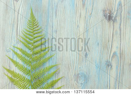 Green forest wild fern border monogram on blue vintage wooden background with copy space