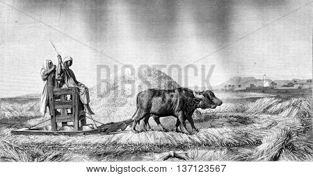 1861 Exhibition of Painting, Threshing wheat in Egypt, vintage engraved illustration. Magasin Pittoresque 1861.