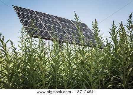 solar panel in the high grass clean energy background