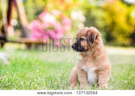 Happy Little Puppy Dog