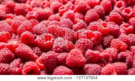 natural food background with ripe raspberry, close up