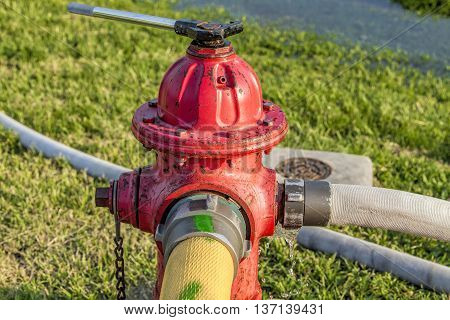 Fire hose hooked up to a rusty red fire hydrant.