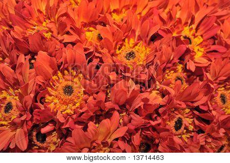 Hats with sunflower petals of orange light
