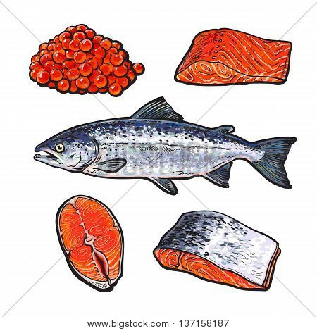sea fish salmon with caviar and fillets, sketch hand-drawn illustration isolated on white background, fresh sea fish salmon, seafood salmon, red caviar, a set of seafood with fresh food food