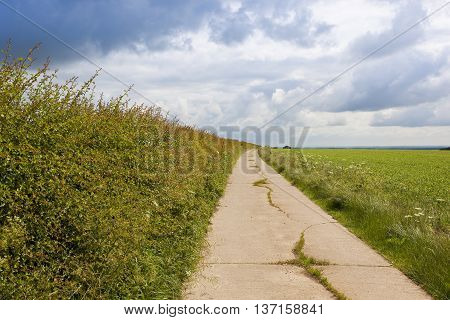 Footpath With Hawthorn Hedgerow