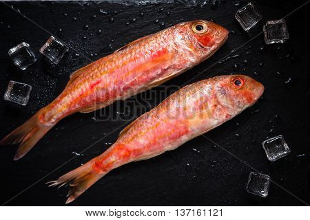 Fresh fish red mullet with ice on slate tray. Saltwater fish. Eye bird view