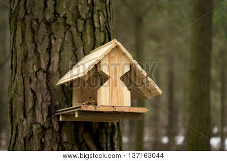 space for feeding birds in a forest in a house