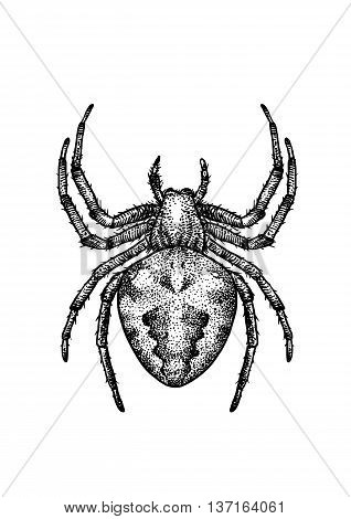 It is a spider, what made by ink, then it was digitalized.