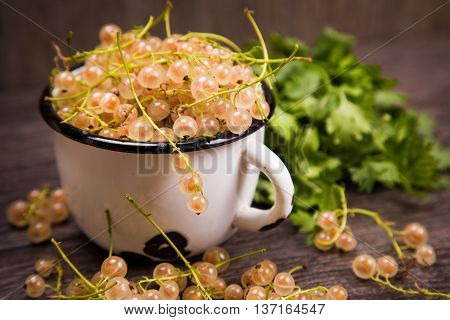white ripe raw fresh currant with green cilantro in studio