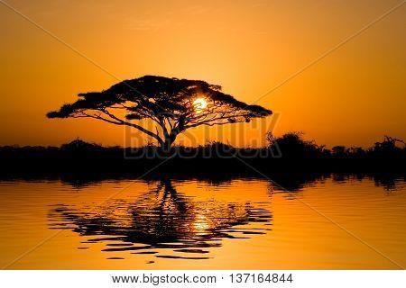 Beautiful african sunrise reflected on lake with backlit acacia tree on Amboseli Natural Park Kenya.