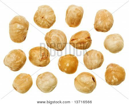 Nueces de cáscara Hazel aisladas en blanco, Fondo de alimentos