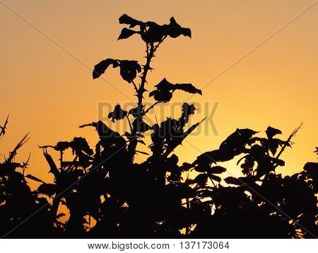Blackberry tree contrasted under the autumn sun