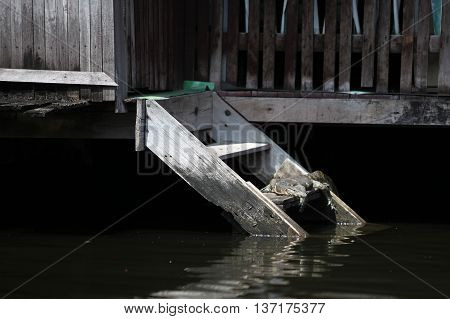 monitor lizard lying on the porch of a residential home of the river channel in Bangkok, Thailand