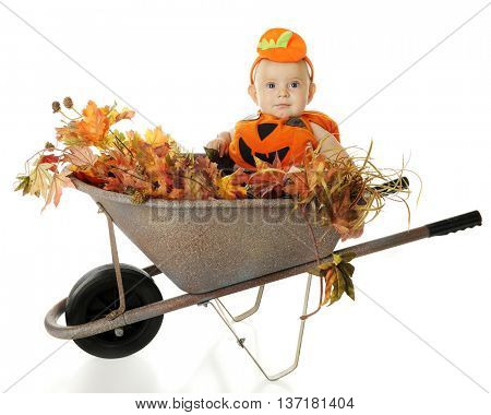 An adorable baby boy in his pumpkin costume, sitting in a small, rustic wheelbarrow filled with fall foliage.  On a white background.