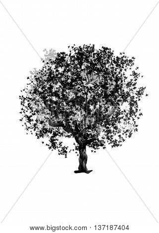 Drawing tree maple on a white background. Isolated black silhouette on a white background. Graphic arts.