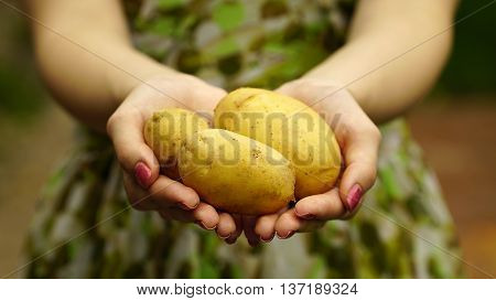 Woman holding a young potatoes close up