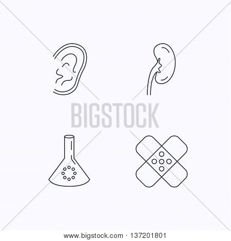 Lab bulb, medical plaster and ear icons. Kidney linear sign. Flat linear icons on white background. Vector