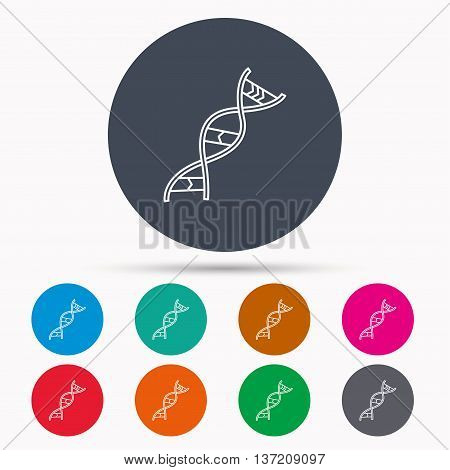 DNA icon. Genetic evolution structure sign. Biology science symbol. Icons in colour circle buttons. Vector