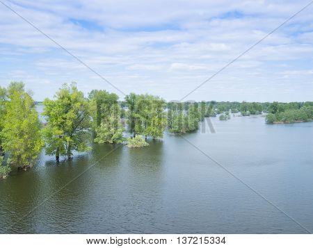 Flood River Flow, Spilled  Forest Trees After Big Thunderstorm.