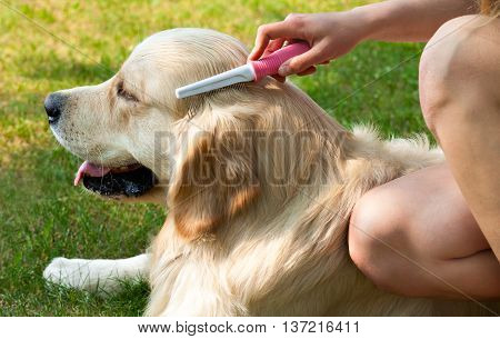 The content of Labrador. Human friendship and dogs. Hygienic procedures. Care dog fur outdoors. Human hand brushing fur golden retriever.