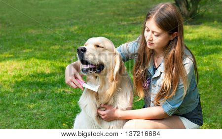 The content of Labrador. A young girl cares for dog fur outdoors. Hygienic procedures. The owner of a pure breed dog fur golden retriever. Human friendship and dogs.