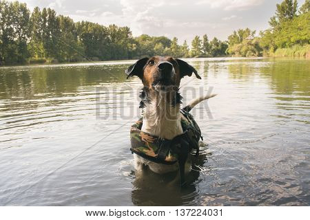 cute terrier dog posing in water