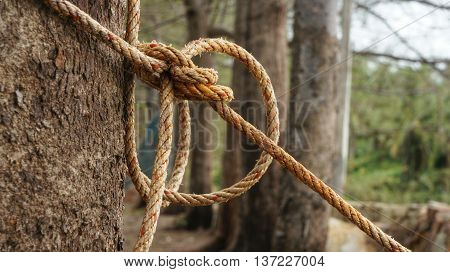 Rope with knot around tree trunk. Rope tightened around tree trunk in front of blurred natural background