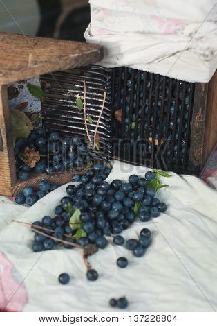 wooden tools are used to gather blueberries a scattering of fresh forest berries