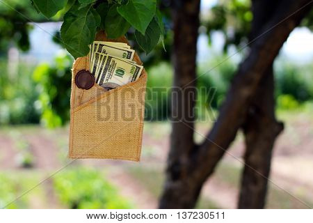 money on the tree. Finance and nature.