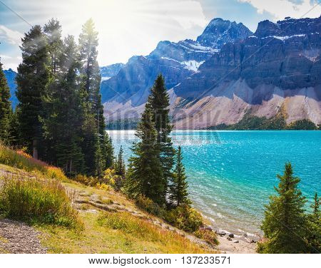 Canadian Rockies. Banff National Park. Amazing mountain glacial Bow Lake with emerald water. The lake is surrounded by pine trees