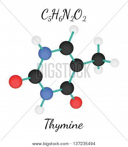 C5H6N2O2 Thymine 3d molecule isolated on white