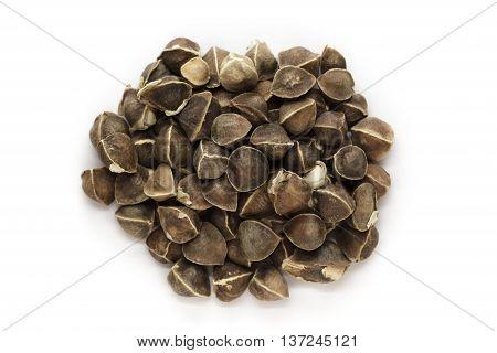 Organic Wingless Moringa (Moringa oleifera) seeds isolated on white background. Macro close up. Top view.