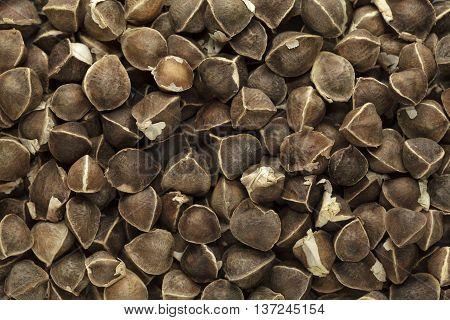 Organic Wingless Moringa (Moringa oleifera) seeds. Macro close up background texture. Top view.