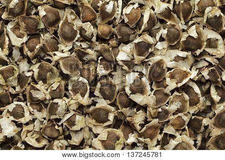 Organic Moringa (Moringa oleifera) seeds. Macro close up background texture. Top view.