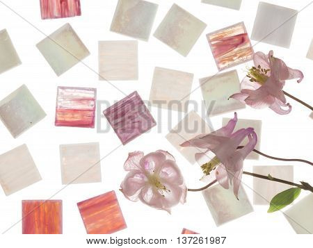 beautiful white pearl and clear pink and purple glass mosaic with light blurred stripes and delicate flowers pink aquilegia similar in color to the mosaic on a white background isolation
