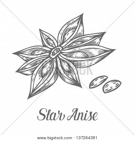 Anise Star Flower Seed Plant . Hand Drawn Sketch Vector Illustration Isolated On White. Spicy Herbs.