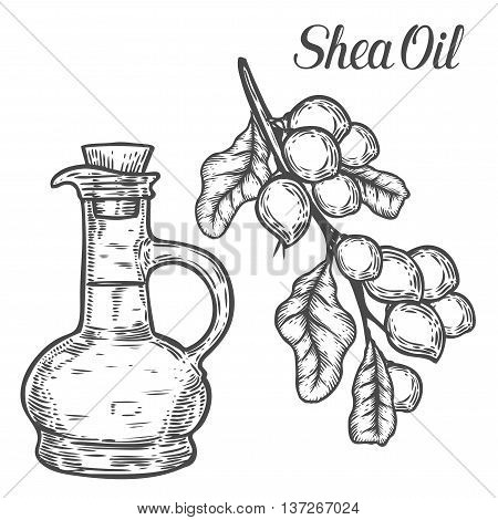Shea Oil Bottle Nuts Plant, Berry, Fruit Natural Organic Butter Ingredient. Hand Drawn Vector Sketch