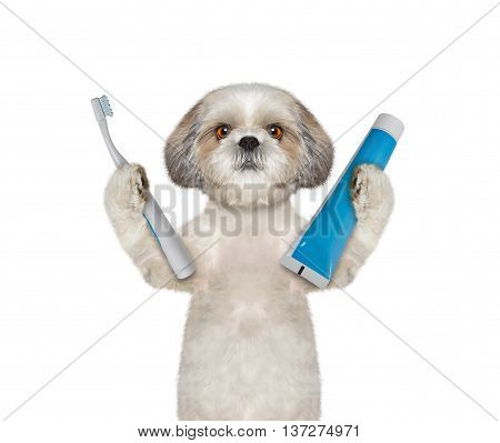 dog is going to clean the teeth -- isolate on white background