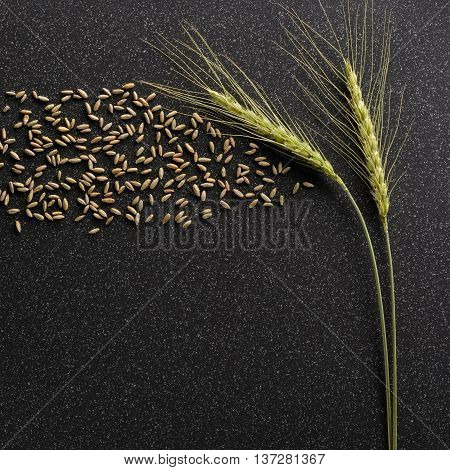Rye Grains Ejected From The Ears