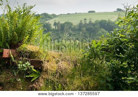 Countryside Landscape Through A Hedge