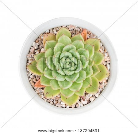 Rectangular arrangement of succulents; cactus succulents in a planter