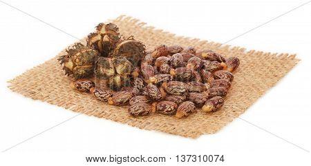 Castor beans on sack over white background