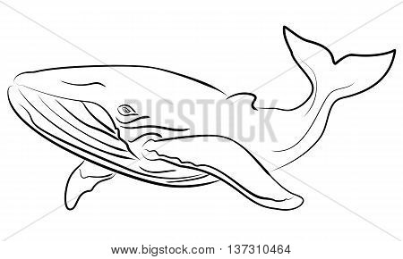 Blue whale Vector hand drawn sketchy illustration